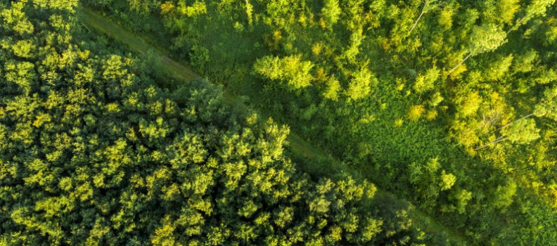 Solero plant eigen bedrijfsbos met Trees for All